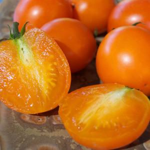 Ida Gold Tomato