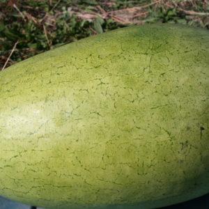 bozeman-watermelon