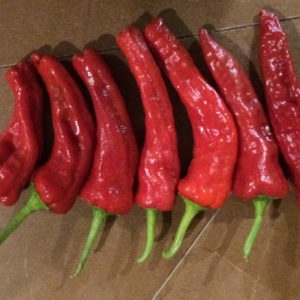 canoncito-new-mexico-landrace-chili