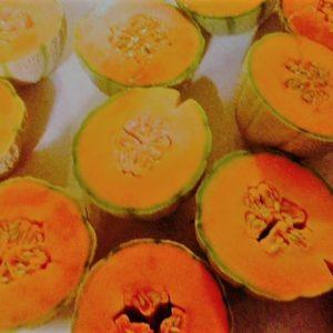 golden gopher melons
