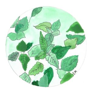 lemon balm color